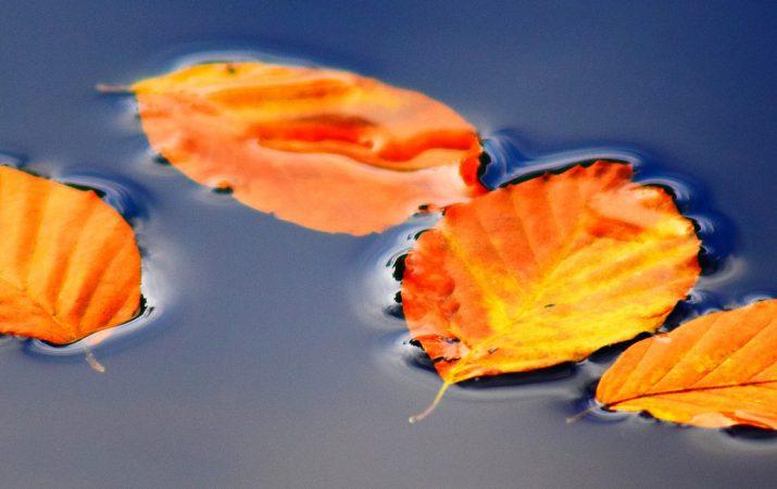 Gartenteich: Der Herbst kann kommen